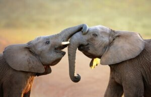 Hayvanların Hisleri Var Mı, Hiç Merak Ettiniz Mi?