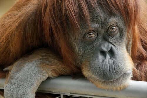 kameraya bakan sevimli goril ve hayvanların hisleri var mı