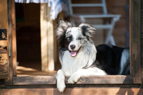 Köpekler Neden Görünmez Kapılar Görür