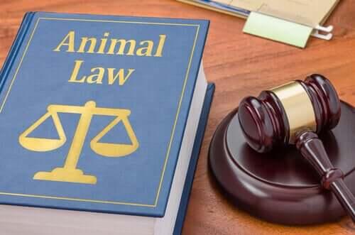 Hangi Durumlarda Hayvan Avukatı Gerekir?