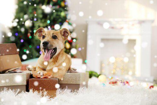 Evcil Hayvanlar İçin Düzenlenen Kutlamalar