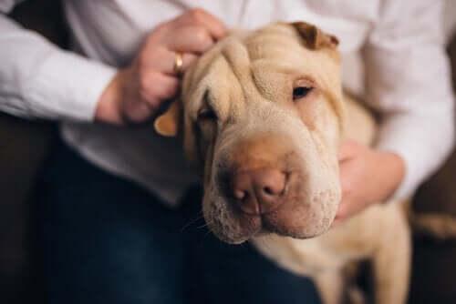 Köpeğiniz Sizi Herkesten Daha İyi Tanıyor