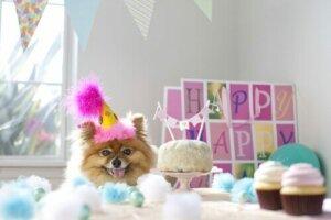 Köpeğin doğum günü kutlanıyor.
