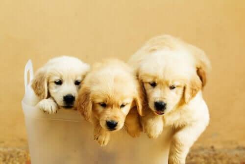 Atılan Köpek Yavruları: Onları Terk Etmeyin!