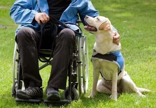 Köpekler İnsanların Hayatlarını Daha İyi Hale Nasıl Getirir?