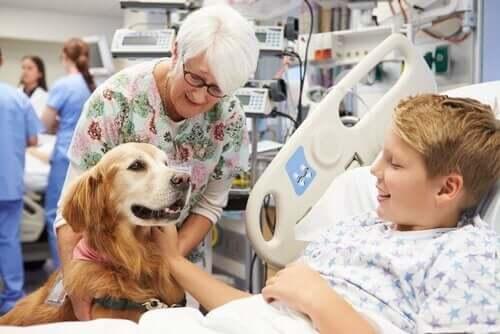 Eğitimli köpek çocuğu gülümsetiyor.