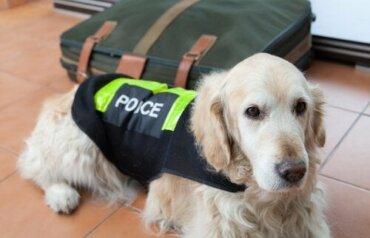 Kara Para Aklayanların İzini Süren Köpekler