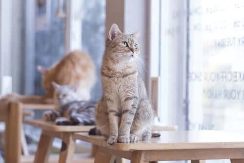 Kedi Sahibi Olmak Kalp Sağlığınızı İyileştirebilir