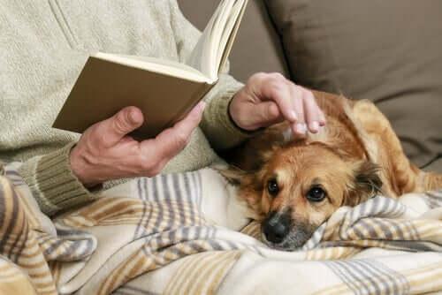 Kitap okurken köpeğini seven bir kişi.