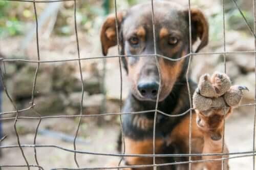 Evcil Köpekler Kuzey Kore'de Kim Jong Un Tarafından Yasaklandı