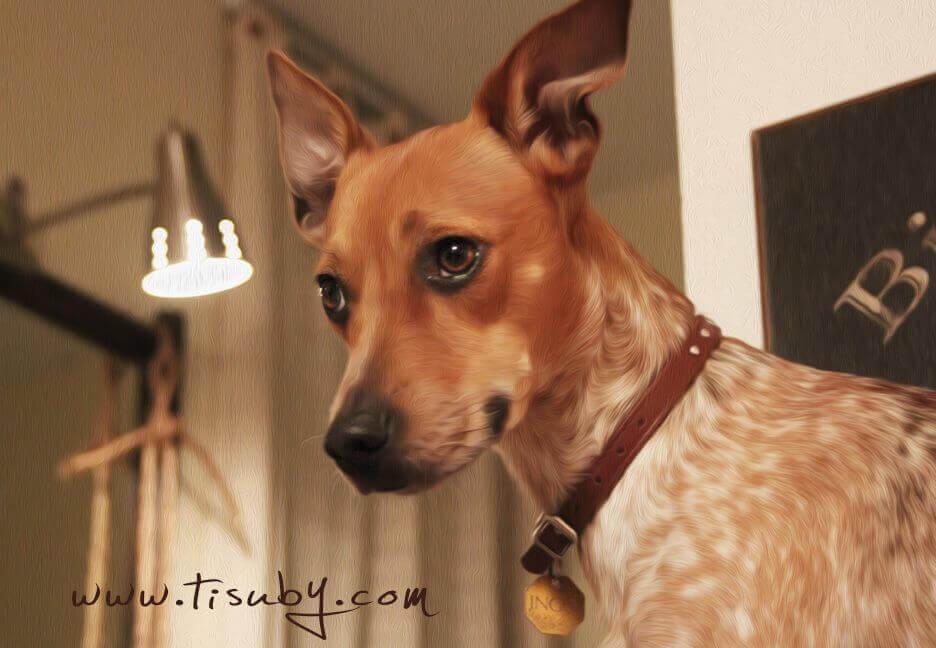 venezuelalı şarkıcı tisuby köpeği