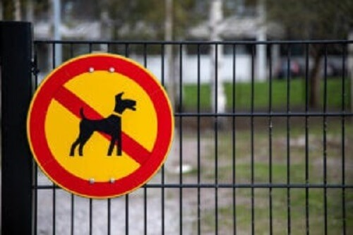 Köpeklerin yasak olduğunu gösteren bir işaret.