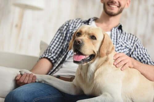 Köpekler Neden Ses Tonumuzu Tanır, Biliyor Musunuz?