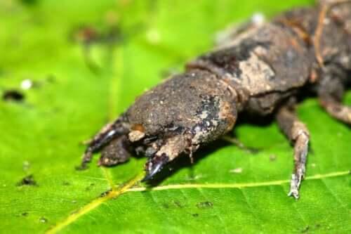 Korkunç Görünen Zararsız Böcekler