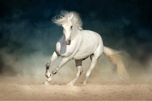 Atlarda Koliğin Önlenmesi ve Erken Teşhisi