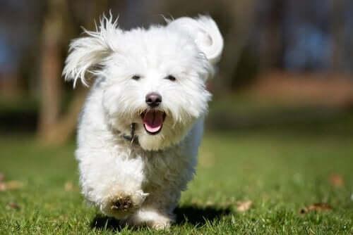 Köpekler Ödül Maması Verdiğinizde Neden Kaçar