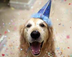 Köpek için doğum günü partisi.
