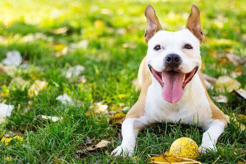 Mutlu ve Sağlıklı Bir Köpek İçin 5 Önemli İpucu