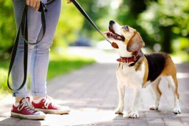 Köpek Eğitimi: Köpeğinizi Nasıl Motive Edersiniz?