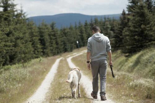 Köpekler Neden Sahiplerini Takip Ederler?