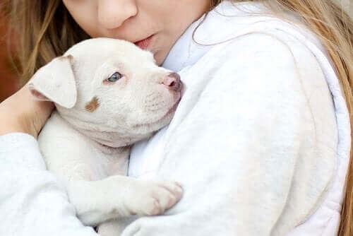 Otizm Teşhisi Konulan Çocuklar İçin Hayvan Destekli Terapi