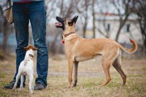 sahibini anlayan köpek