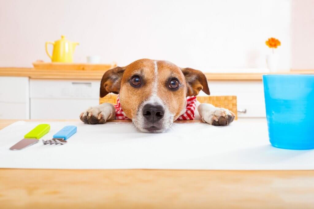 köpeklerde vejetaryen beslenme