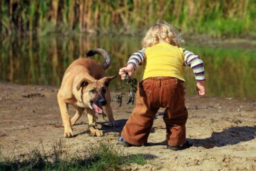 Çocuğunuz Köpeklerden Korkuyorsa Ne Yapmalısınız?