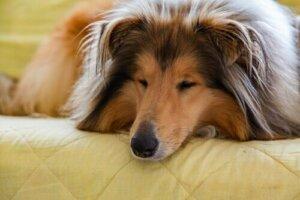 Bir Köpekle Beraber Yaşamak: İlişkinizi Güçlendirme Yolları