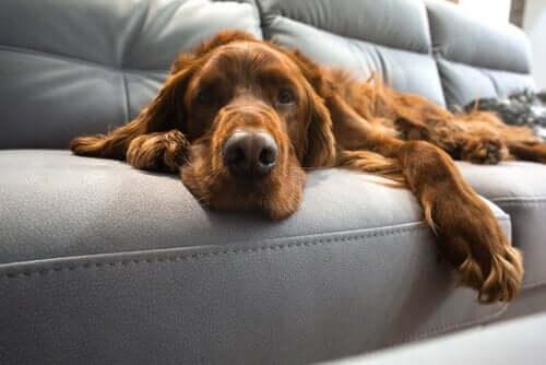 Yaşlı Köpek Eğitimi: Onlar Da Yeni Numaralar Öğrenebilir!