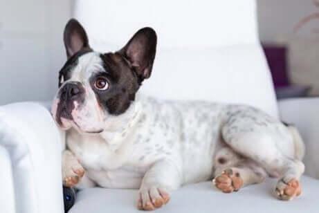 yeni bir eve taşınacak köpek