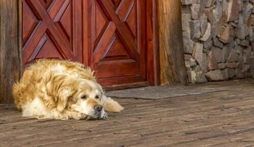 Yeni Bir Eve Taşınmak Köpeğinizi Nasıl Etkiler?