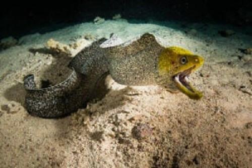 Denizin dibindeki bir yılan balığı.