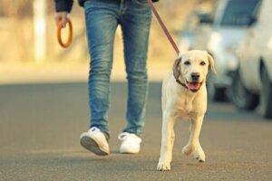 Sahibi ile yürüyen köpek
