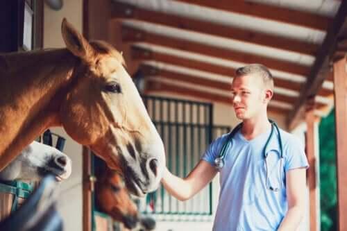 Atlarda Laminitis Durumu Nasıl Ortaya Çıkar?