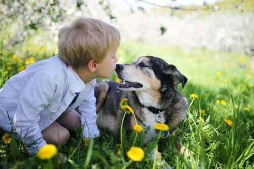 Çocuk ve sadık arkadaşı