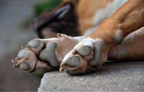Köpeklerde Lupus neden meydana çıkıyor?