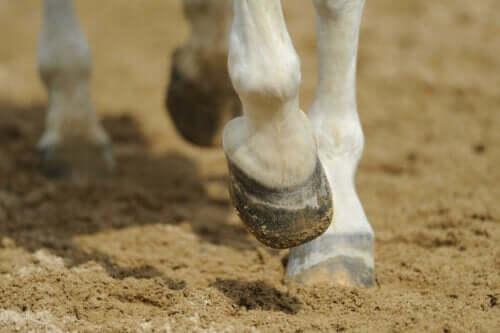 Atların ölümüne kadar sebep olacak bir problem olan arpalama.