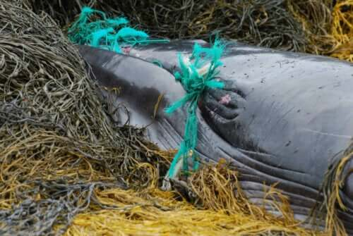 Ölümden dönen balinalar.