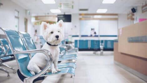 hastanedeki köpek