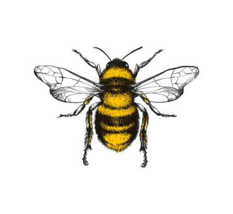 arı dansı