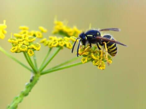 arı çiçek üzerinde