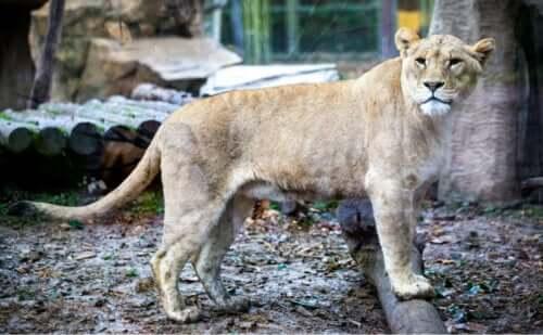 kameraya bakan aslan ve doğal çevre