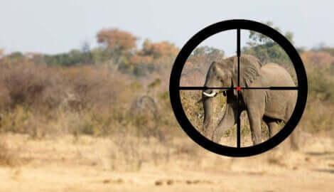 fili avlamaya çalışan avcı nişan alıyor
