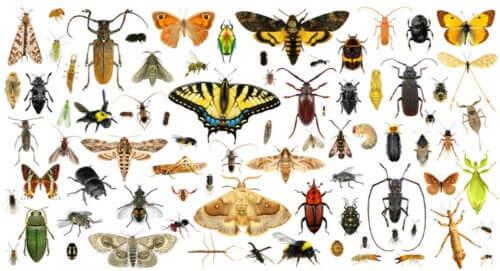 Çeşit çeşit böceklerin bulunduğu bir fotoğraf.