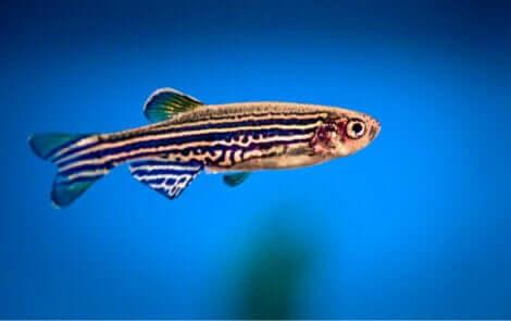 mavi sularda yüzen renkli balık ve uyumayan hayvanlar