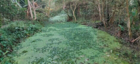 ağaçların altında yer alan büyük bataklık ve suların kirlenmesi