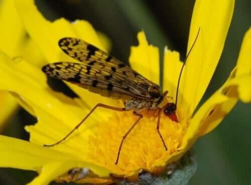 çiçeğin üzerindeki sinek