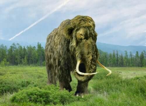 doğal yaşam alanında dolaşan bir mamut