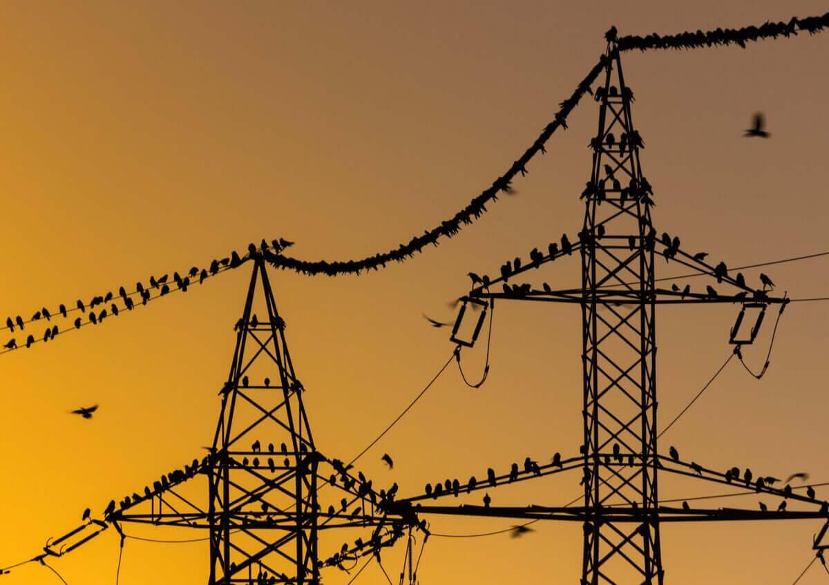 elektrik direkleri ve telleri üzerinde kuşlar